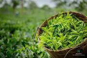 Halmari Tea Online Store To Buy Tea Loose Leaf.